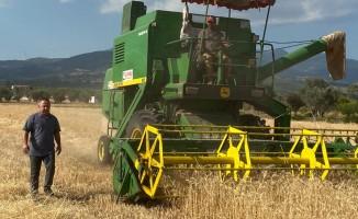 Kemalpaşa'da buğday hasadı devam ediyor