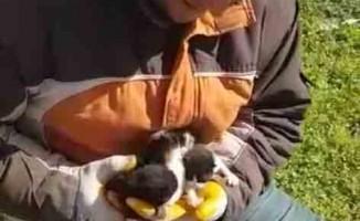 Çöpe atılan yavru kediler hayata geri döndü